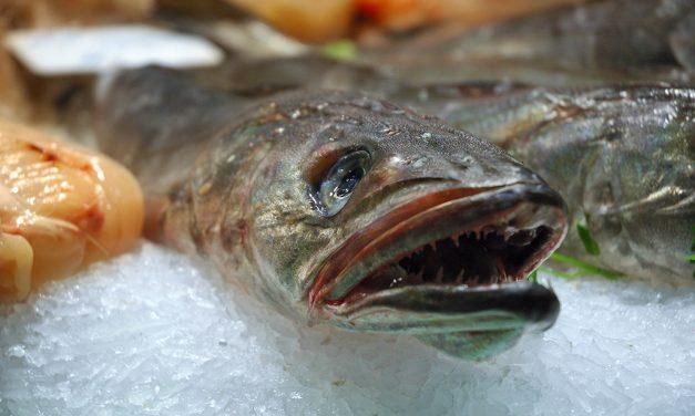 Propiedades nutritivas de la merluza
